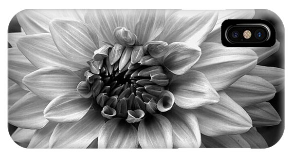 Dahlia Art IPhone Case