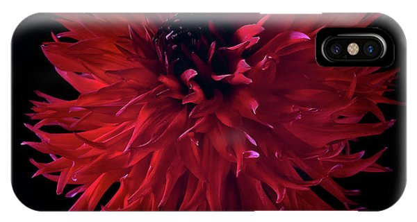 Dahlia 'holyhill Miss Scarlet' IPhone Case