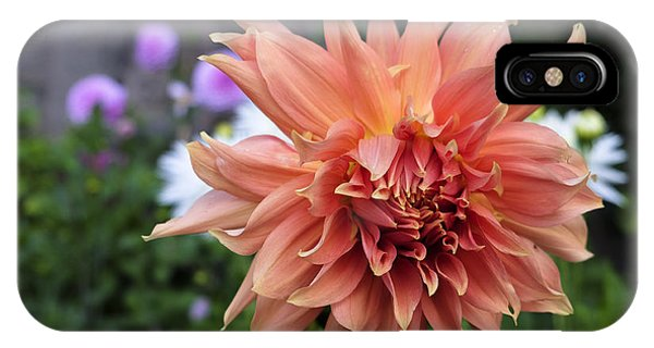 Dahlia - Inverness IPhone Case