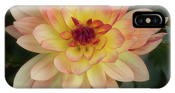 Dahlia 'keith H.' IPhone Case