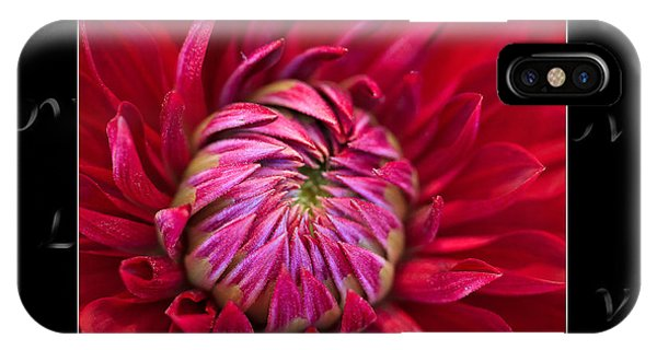Dahlia Of Love IPhone Case