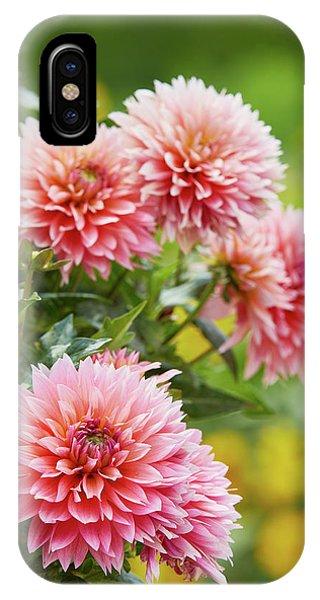 Dahlia Passion Fruit IPhone Case
