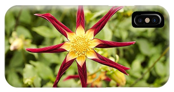IPhone Case featuring the photograph Dahlia Star by Brian Eberly