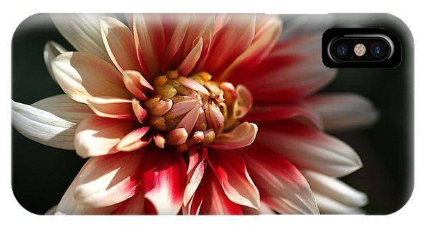 Dahlia Warmth IPhone Case