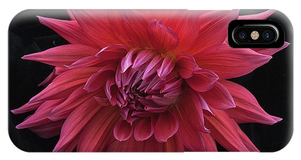 Dahlia 'wyn's King Salmon' IPhone Case