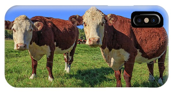 New Hampshire iPhone Case - Cattle Andover New Hampshire by Edward Fielding