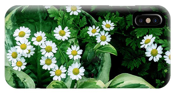 iPhone Case - Daisies And Hosta In Colour by Bill Linn