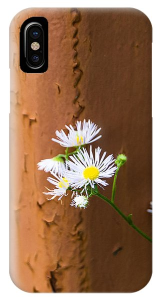 Daisy And Rust IPhone Case