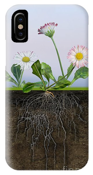 Daisy Bellis Perennis - Root System - Paquerette Vivace - Margar IPhone Case