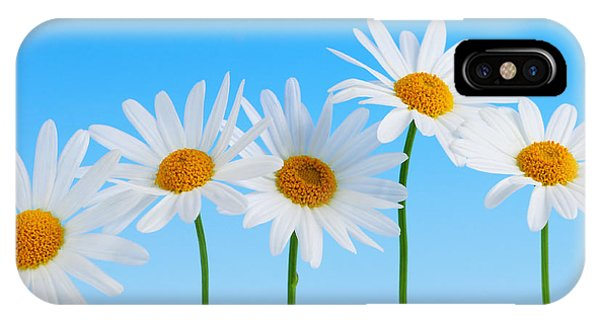 Floral iPhone Case - Daisy Flowers On Blue by Elena Elisseeva