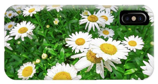 Daisy Garden IPhone Case