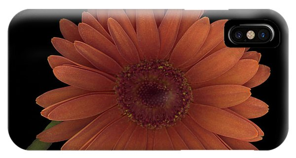 Daisy Tilt IPhone Case