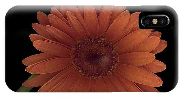 Daisy Tilt IPhone Case