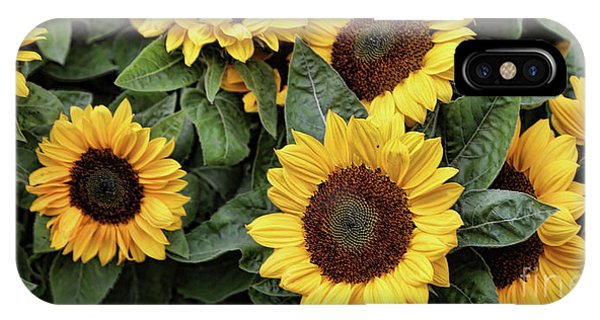 Daisy Yellow  IPhone Case