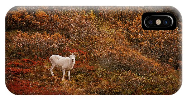 Dall Sheep Denali National Park IPhone Case
