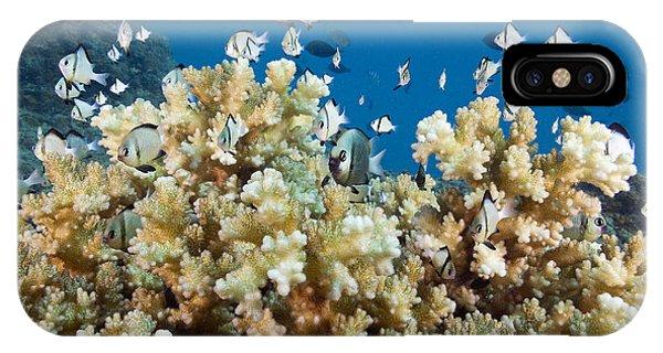 Damselfish Among Coral IPhone Case