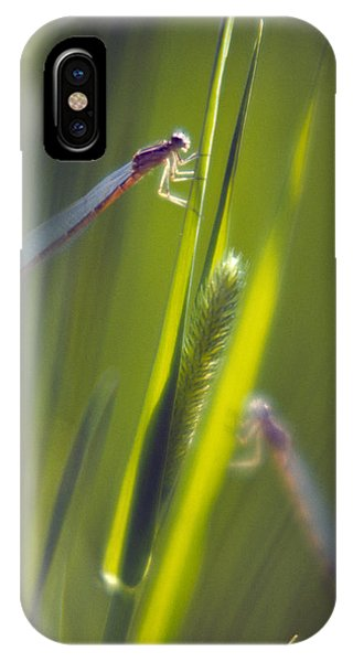 Damselflies IPhone Case