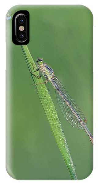Damselfly IPhone Case