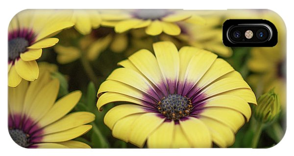 Dance With Daisies IPhone Case