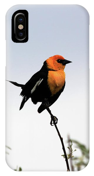 IPhone Case featuring the photograph Dancing Blackbird by Shane Bechler