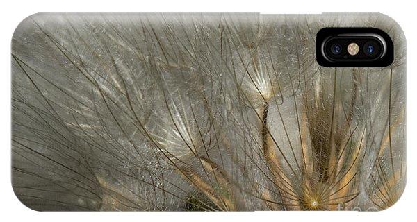 Dandelion 3 IPhone Case