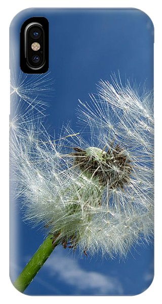 Dandelion And Blue Sky IPhone Case