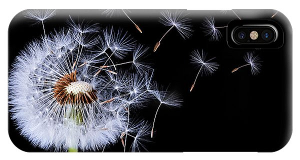 Dandelion Blowing On Black Background IPhone Case