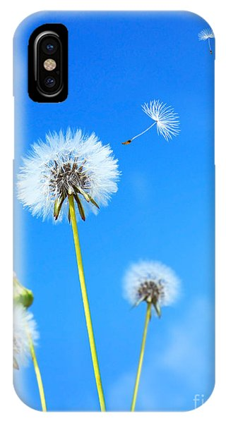 Dandelion Field IPhone Case