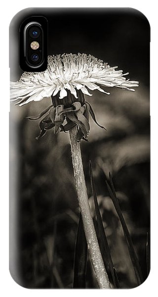 Dandelion In Black And Wite IPhone Case