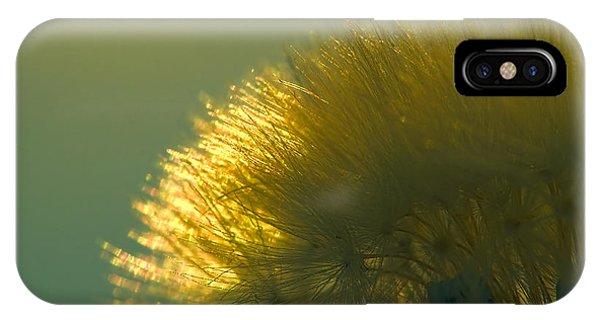 Dandelion In Green IPhone Case