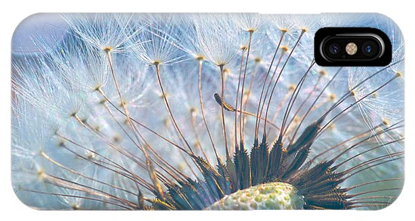 Dandelion In Light IPhone Case