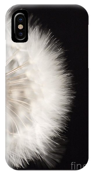 Dandelion In Macro 4 IPhone Case