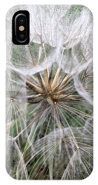 iPhone Case - Dandelion Seed Head  by Kathy Spall