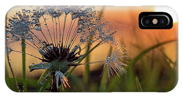 Dandelion Sunset 2 IPhone Case