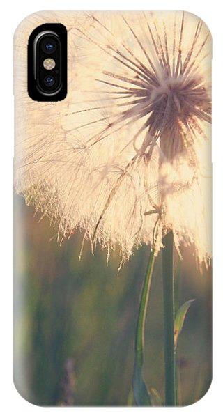 Dandelion Sunshine IPhone Case
