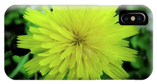 Dandelion Symmetry IPhone Case