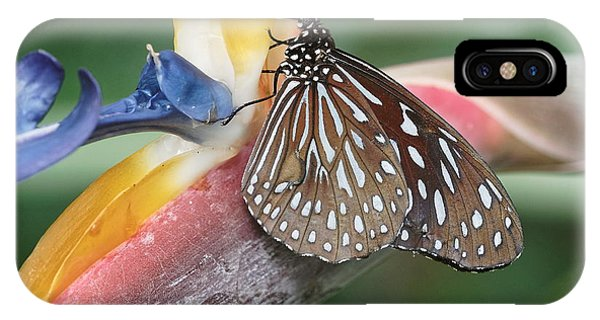 IPhone Case featuring the photograph Dark Blue Tiger Butterfly - 1 by Paul Gulliver