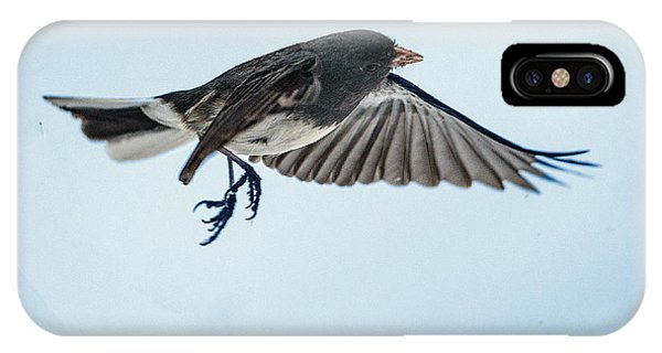 Dark-eyed Junco Flying IPhone Case