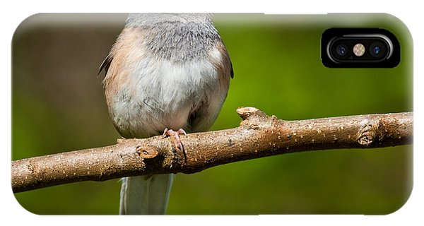 Dark Eyed Junco Perched On A Branch IPhone Case