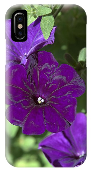 Dark Purple Petunias IPhone Case
