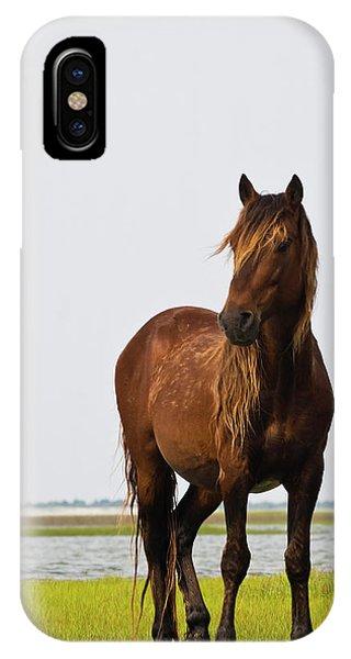 Dark Stallion IPhone Case