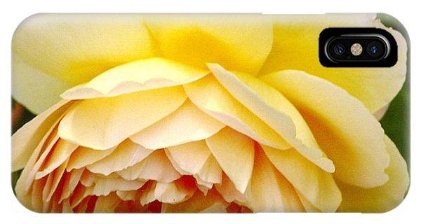 David Austin Rose Golden Celebration 2 IPhone Case