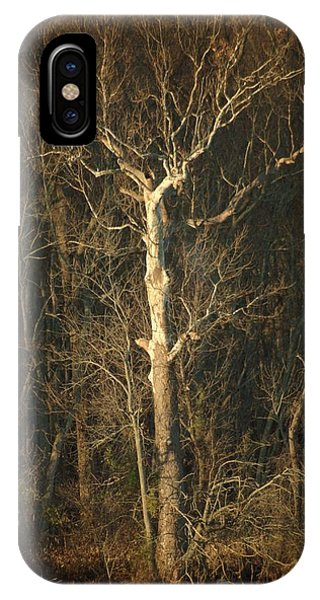 Day Break Tree IPhone Case