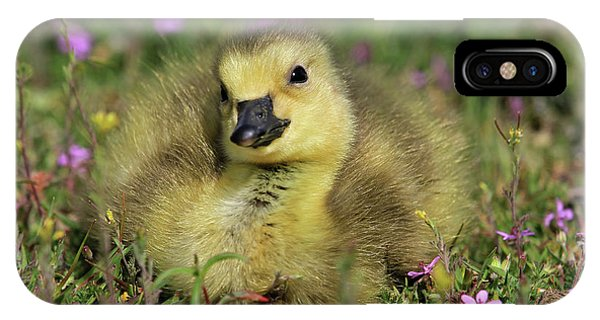 Goslings iPhone Case - Daydreamer by Donna Kennedy