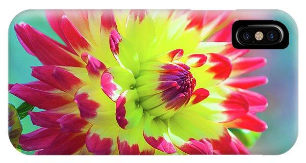 Dazzling Dahlia Flower IPhone Case