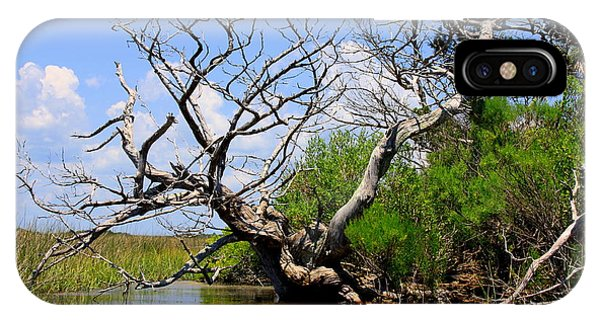 Dead Cedar Tree In Waccasassa Preserve IPhone Case