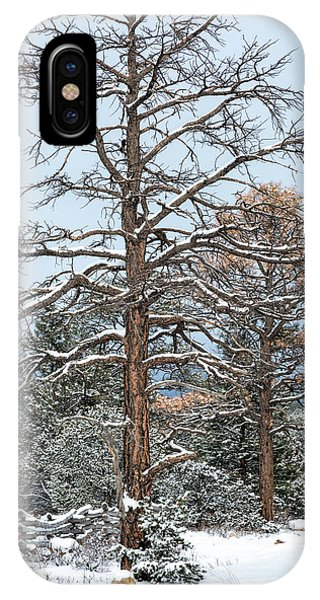 IPhone Case featuring the photograph Dead Ponderosa Pines In Winter by Denise Bush