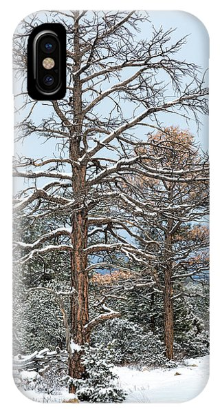 Dead Ponderosa Pines In Winter IPhone Case