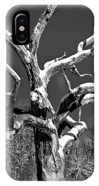 Dead Tree - Uw Arboretum - Madison - Wi IPhone Case