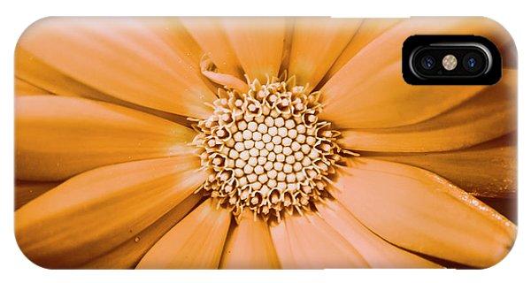 Garden Wall iPhone Case - Decorative Closeness by Jorgo Photography - Wall Art Gallery
